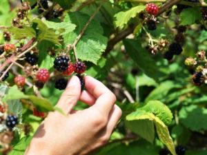 Работа в поле и на ягоде